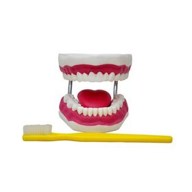 Arcada-Dentaria-Gigante-com-Lingua-e-Escova-Sdorf.jpg