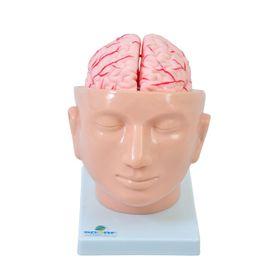 Cabeca-com-Cerebro-em-9-Partes-Sdorf.jpg